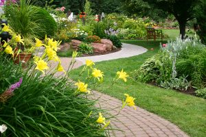 GARDEN CARE IN THE DROUGHT